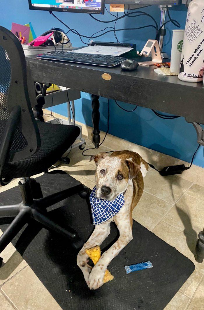 Atla Coworkers Pets